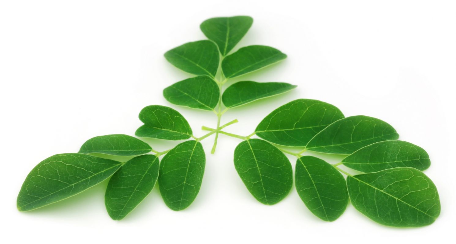 Le Moringa, plante d'exception