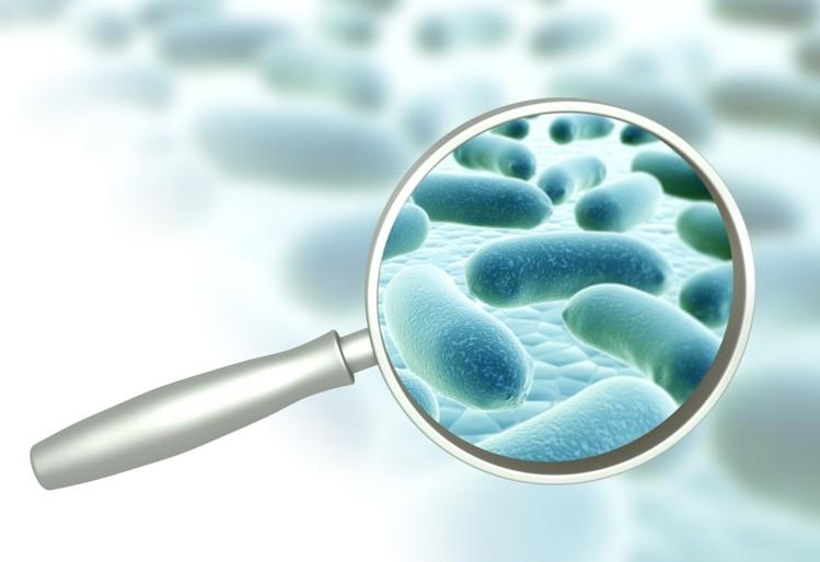 Les probiotiques c'est quoi ?